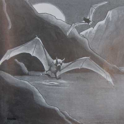 Fish-eating Bat, Myotis vivesi