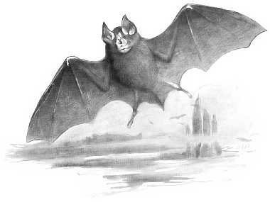 Greater Horseshoe Bat, (Rhinolophus ferrumequinum)