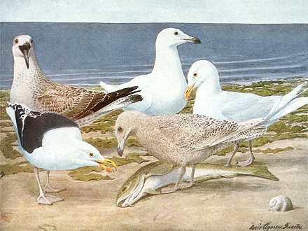 Seabirds foraging along the shore