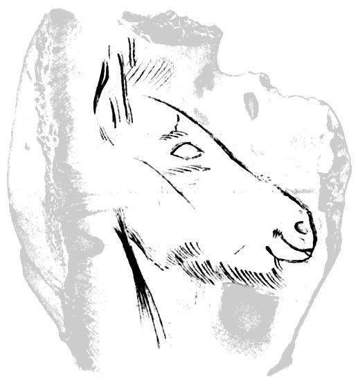 Steppe Horse Carved in Bone, Grotte du Pape