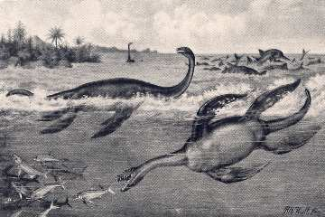 Plesiosaurus guilelmi imperatoris and Meyerausaurus victor