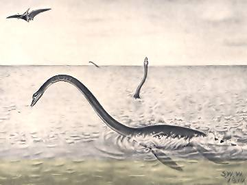Pliosaurus Elasmosaurus platyurus