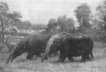 Trilophodon, Four tusked Mastodons