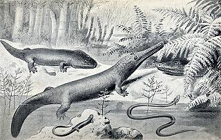 Amphibians of the Permian