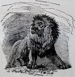 Cave Lion, largest cat that ever lived