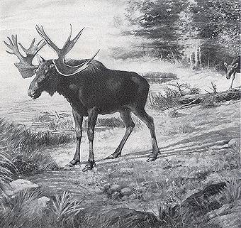 A moose of the Ppleistocene