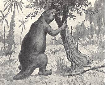 Giant sloths grew to 30 feet tall.