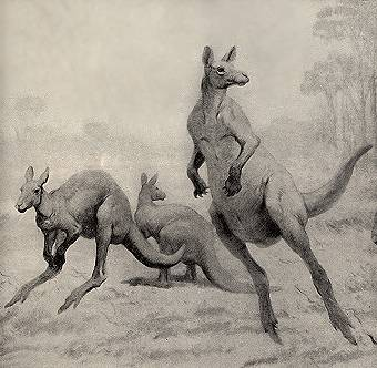 Procoptodon goliah, Giant Kangaroos