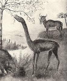 Long Necked Camel, Aepycamelus