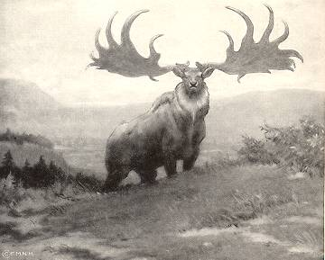 Illustration of Irish deer by Charles R Knight