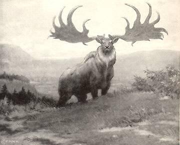 Extinct Irish Deer