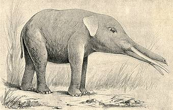 Long Jawed Mastodon