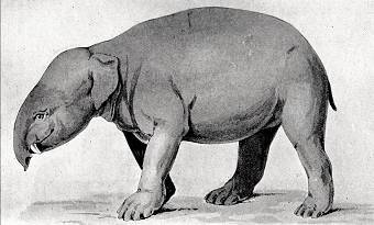 Moeritherium, The tiny elephant