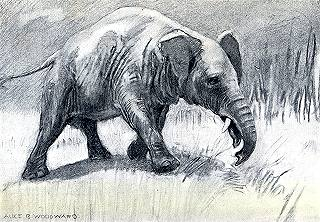 Palaeomastodon grazing in the ancient savannahs