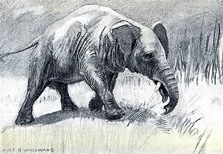 Palaeomastodon grazing in the ancient savannahs