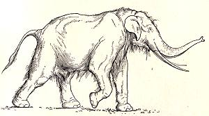 Straight Tusked Elephant