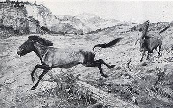 A Pleistocene Horse That Lived in North America