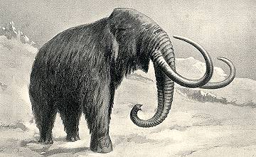 Eleven foot tall woolly mammoth in the Arctic.