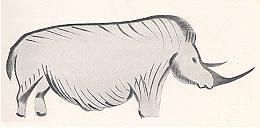 Cave Painting of Woolly Rhinoceros