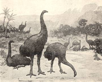 12 Foot Elephant Birds of Madagascar
