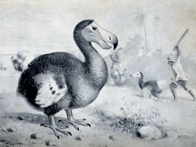 The Extinct Dodo