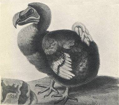 Dodo, a flightless bird of Mauritius