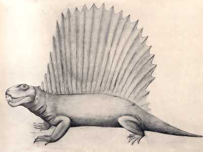 Dimetrodon, Early Reptile of the Permian