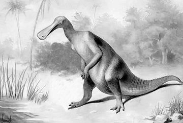 Another duck billed dinosaur