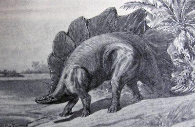 Stegosaurus ungulatus