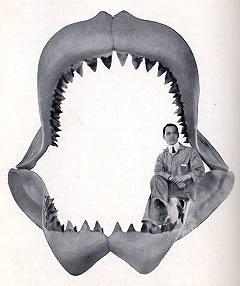 Megalodon, Giant Shark