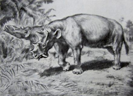Uintatherium laticeps