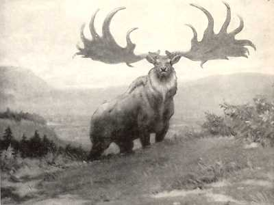 Extinct Irish Deer