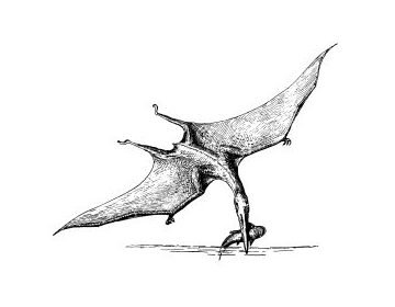 Pterodactyl, In the order Pterosauria