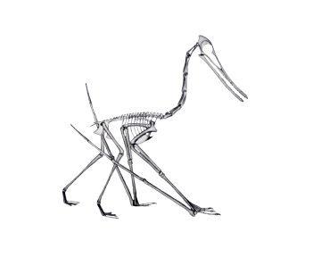 Pterodactyl Cycnorhamphus