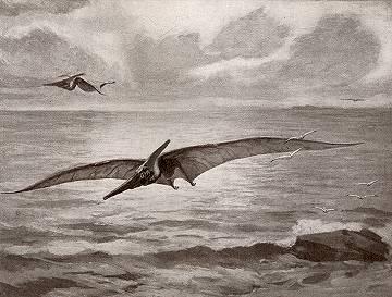 Pteranodons, descendants of pterodactyls.