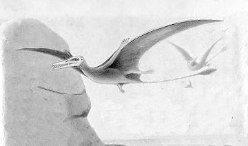 Rhamphorhynchus Pterodactyles